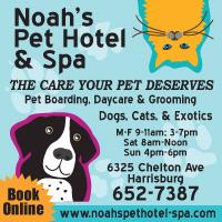 Noah's Pet Hotel & SPA